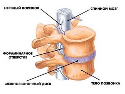 Лечебная физкультура при остеохондроз пояснично-крестцового отдела позвоночника лечение